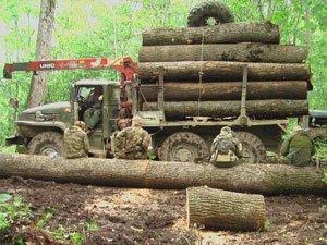 Как раскрывается незаконная рубка леса