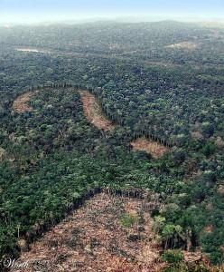 Незаконная рубка леса, причины,закономерности